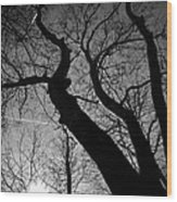 Out Of The Darkness Comes Light Wood Print