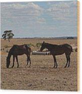Outback Horses Wood Print