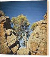 Outback Tree Wood Print
