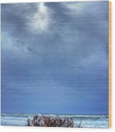 Outer Banks - Driftwood Bush On Beach In Surf I Wood Print by Dan Carmichael