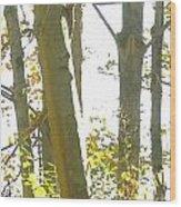 Outside Dafoi Triagex3 Art 1 Of 9  Wood Print