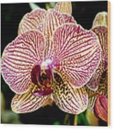 Outstanding Orchid Wood Print