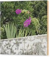 Overhanging Blossoms Yaxcopoil Mexico Wood Print
