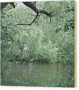 Overhanging Tree Wood Print
