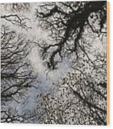 Overhead Trees In Exmoor, United Kingdom Wood Print