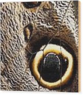 Owl Butterfly Wing Wood Print
