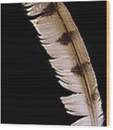 Owl Feather Wood Print