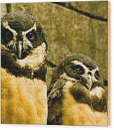 Owl I Wood Print