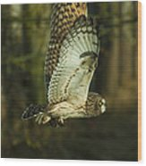 Owl In Flight Wood Print