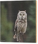 Owl In The Forest Visits Wood Print