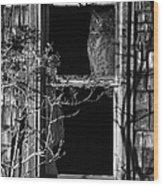 Owl In The Window Wood Print