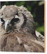 Owl Portrait Wood Print