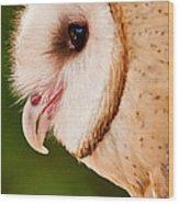 Owl Profile Wood Print