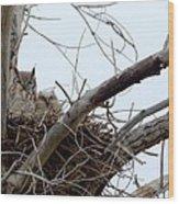 Owl Snuggle  Wood Print by Rebecca Adams