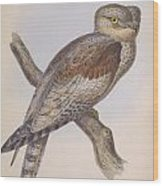 Owl Steanorninae Wood Print