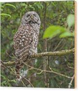 Up - Owl Wood Print