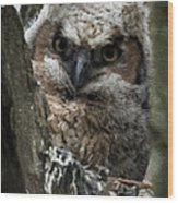 Owlet On The Watch Wood Print