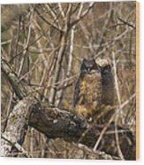 Owlets Wood Print