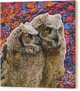 Owlets In Color Wood Print