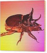Ox Beetle In Color Wood Print