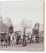 Ox-driven Wagon Freight Train C. 1887 Wood Print by Daniel Hagerman
