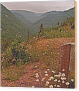 Ox-eye Daisies On Skyline Trail In Cape Breton Highlands Np-ns Wood Print