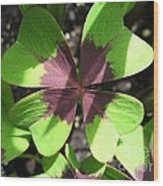 Oxalis Deppei Named Iron Cross Wood Print