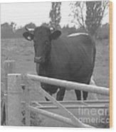 Oxlease Bull Wood Print
