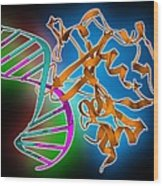Oxoguanine Glycosylase Complex Wood Print by Science Photo Library