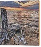 Oyster Bay Stump Sunset Wood Print