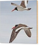 Oyster-catcher Pair Wood Print