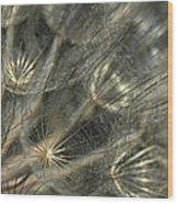 Oyster Flower Seed Head Wood Print