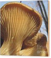 Oyster Mushroom Macro Wood Print