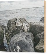 Oysters On The Rocks Wood Print