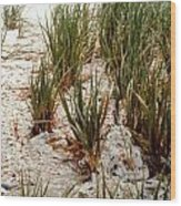 Oysters Sea Grass Wood Print