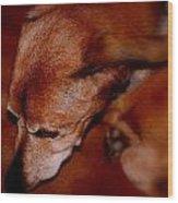 Ozzie Wood Print