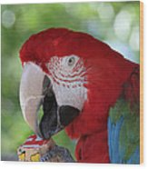 P Is For Parrot Wood Print