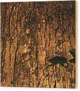 Pa Bark Wood Print