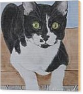 Pablo The Cat Wood Print