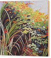 Pacific Crocosmia Wood Print