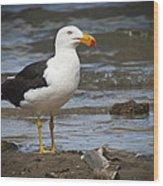 Pacific Gull Wood Print