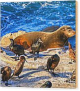 Pacific Harbor Seal Wood Print by Jim Carrell