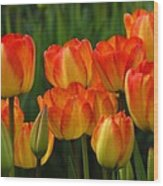 Pacific Northwest Tulips 1 Wood Print