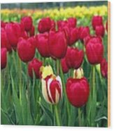 Pacific Northwest Tulips 2 Wood Print