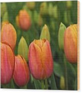 Pacific Northwest Tulips 3 Wood Print