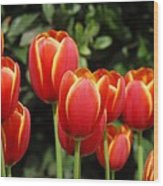Pacific Northwest Tulips 6 Wood Print