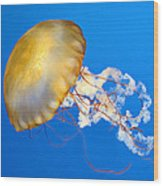 Pacific Sea Nettle Wood Print