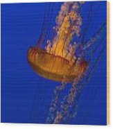 Pacific Sea Nettles In A Row Wood Print