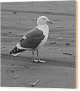 Pacific Seagull In Black And White Wood Print