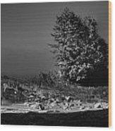 Pacific Shore Juan De Fuca Park Wood Print